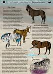 .:Timber Horse Breed Sheet:.