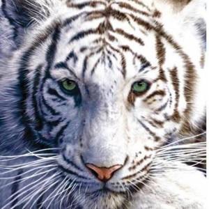 C0ri0lis's Profile Picture