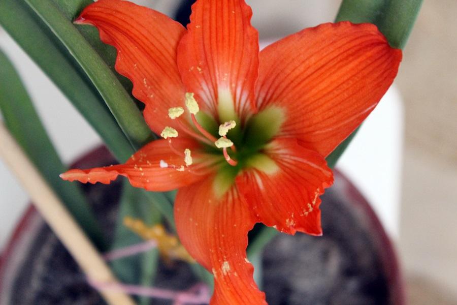 spring by fibulamim