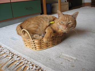 Cat in breadbasket by Akira-Wolf