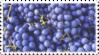 blue purple grapes stamp by GlacierVapour
