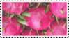 pink_dragonfruit_stamp_by_glaciervapour-dbd533x.png