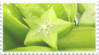 green starfruit stamp by GlacierVapour