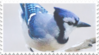 bluejay stamp 2 by GlacierVapour