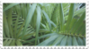 green plant aesthetic stamp 2