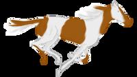 Gallop by SahraJane