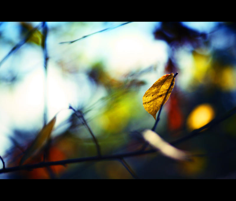Autumn has come 3 by Dmitriyphoto
