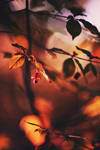 Autumn has come 4 by Dmitriyphoto