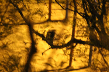 The owl in the shadows by ssimon14