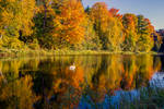 Fall on the pond with Swan