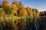 Beautiful Fall Swan