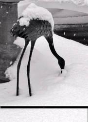 SnowCrane