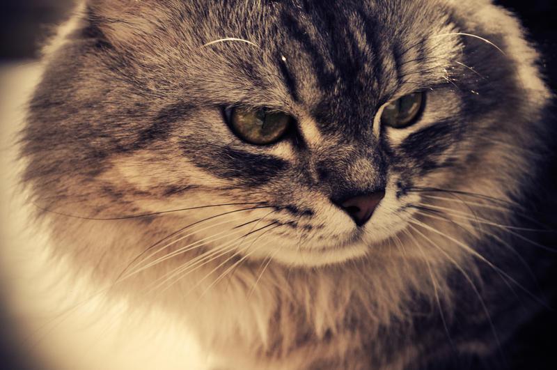 Feline Friends Cat Sanctuary Reviews