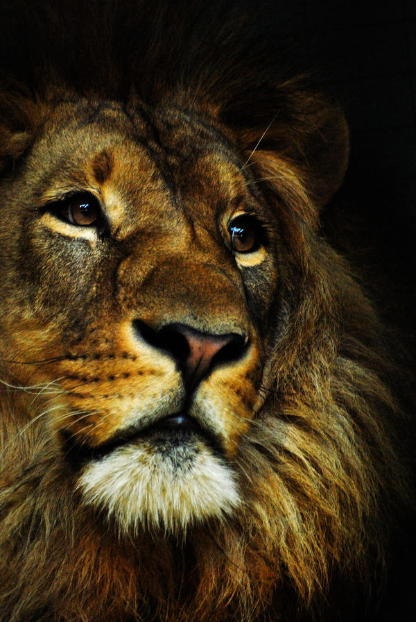 Le Roi Lion by KattFloka