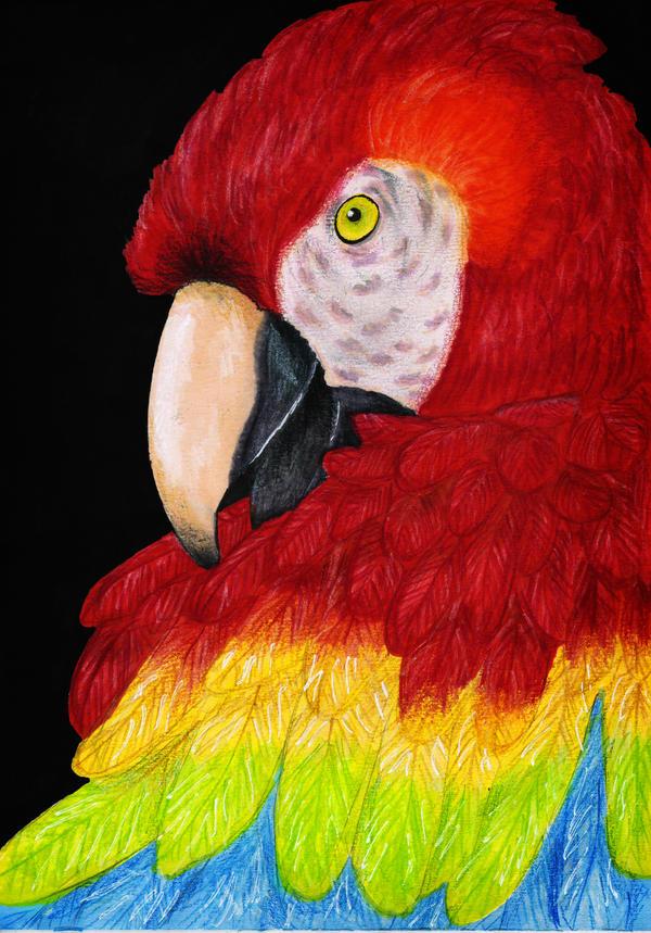 Scarlet Macaw by KattFloka
