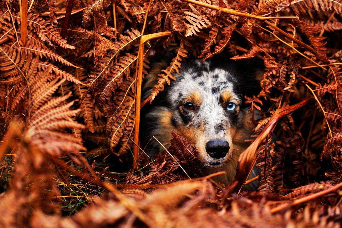 Hiding Again by KattFloka