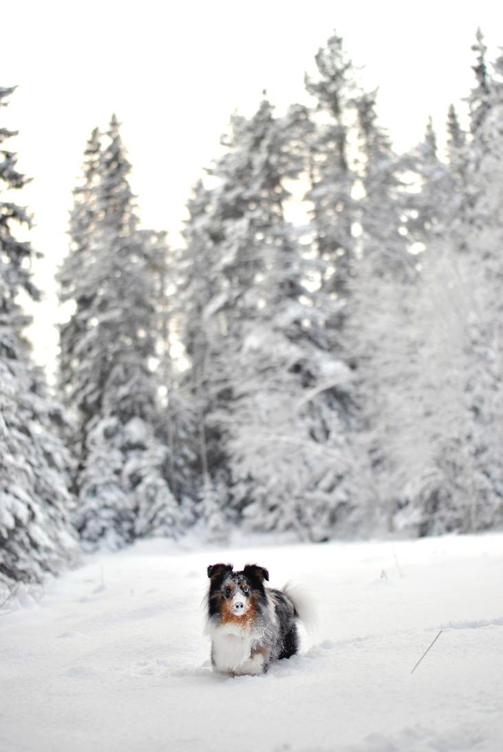 Snow Face by KattFloka