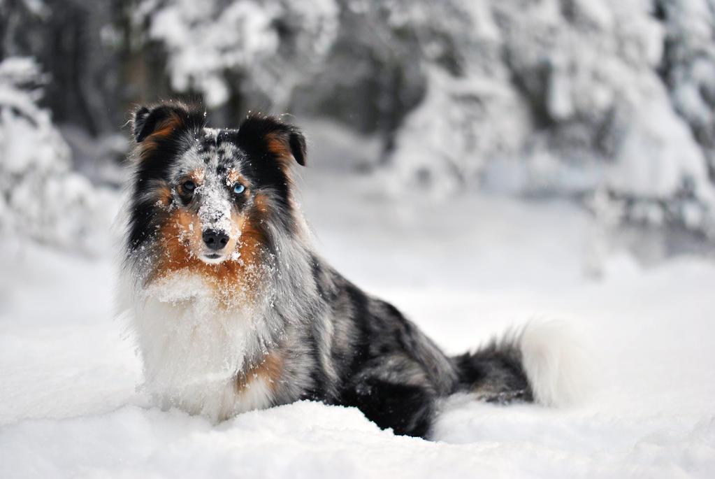 Winter Dog by KattFloka