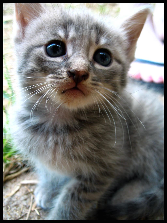 Cute kitten, meet camera. by xKxLxHx