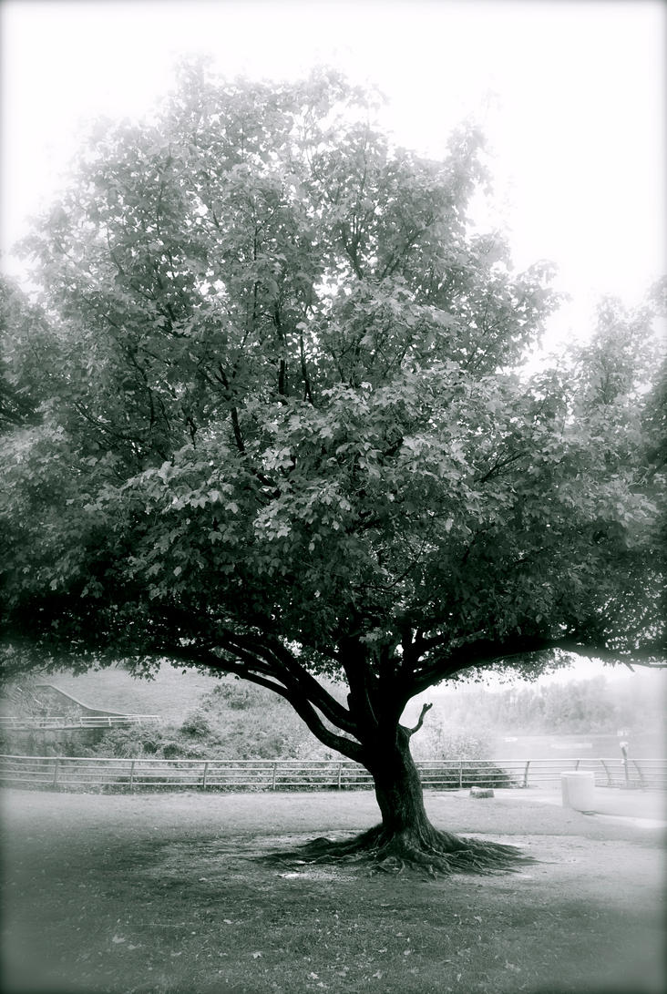A Almost Canadian Tree by fabala090486