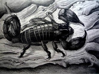 Scorpion by Schinkenspicker