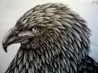 Eagle by Schinkenspicker