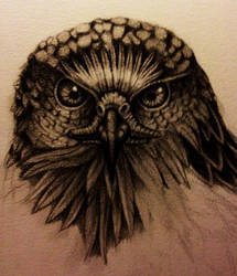 buzzard scetch by Schinkenspicker