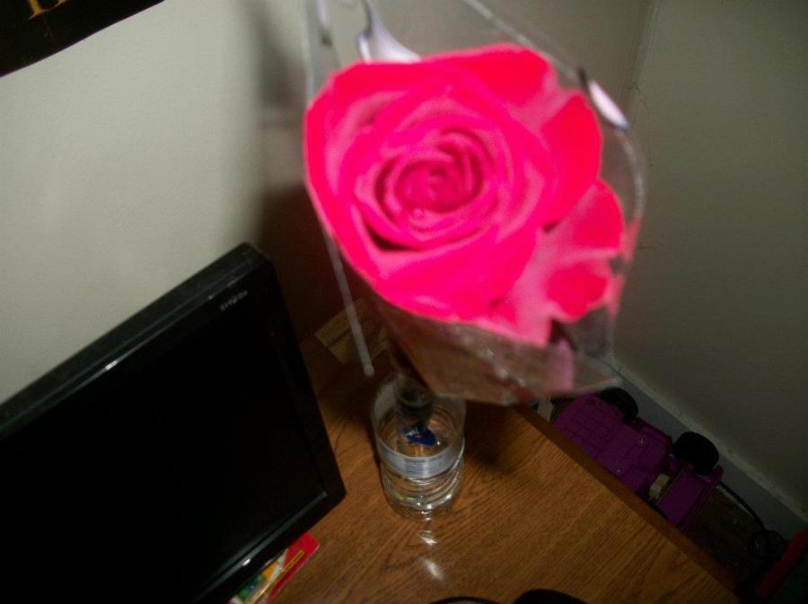 My Rose by leerickman