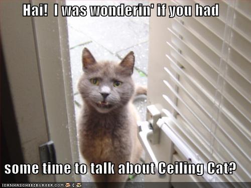 Cat Meows Like Shes Gargaling