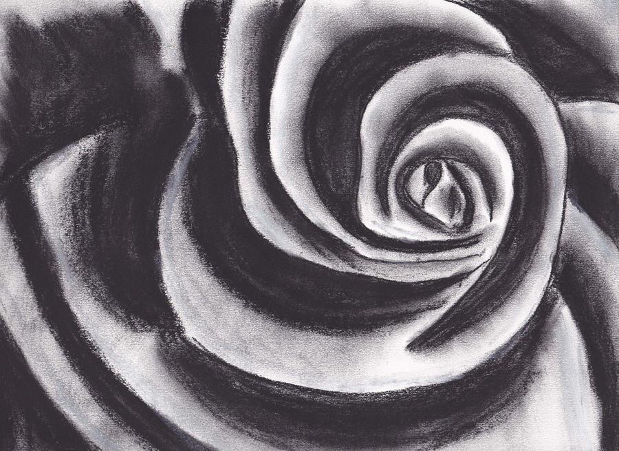 It's just a photo of Simplicity Charcoal Rose Drawing