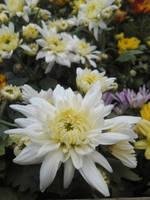 Dahlia among the flowers by Johnny-Aza