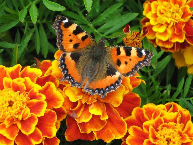 Orange B8ff116c318c0809a74127d254f3ccaf