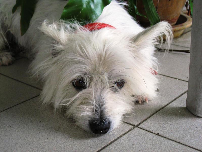 Brooding Doggy