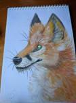 Fox by HandsterButtonz