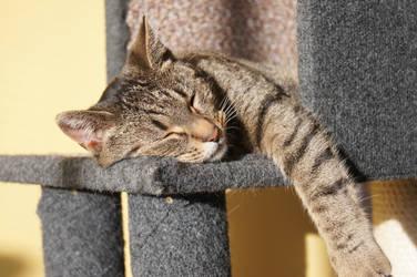 sooo tired... by busiek88