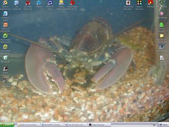 Lobster by Squidgevege