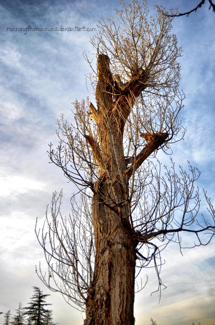 one tree by runningfromdemons