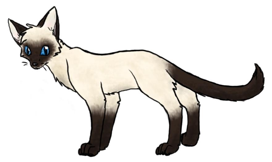 A Warrior Cat Drawing