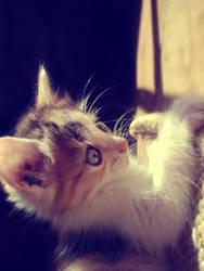 Kitty I