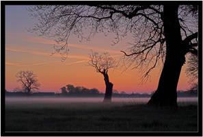 Mystic Morning VI by kiebitz