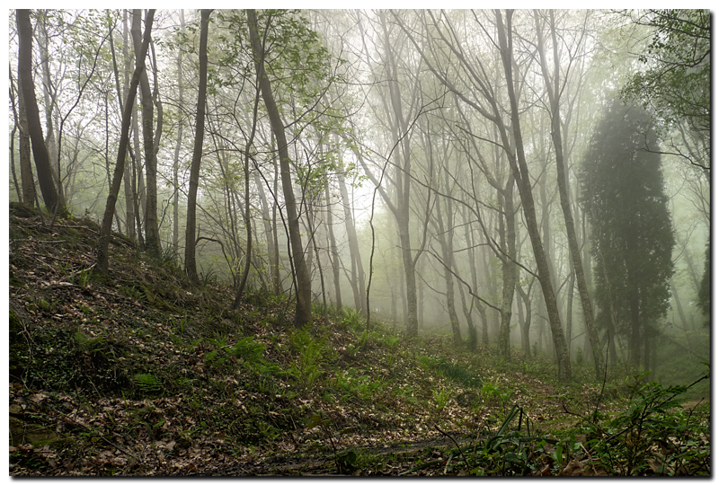 Foggy Forest by kiebitz