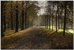 Golden Autumn I by kiebitz