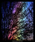 Rainbow Behind Tree