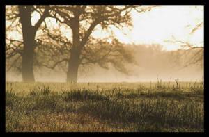 Morning Fog by kiebitz