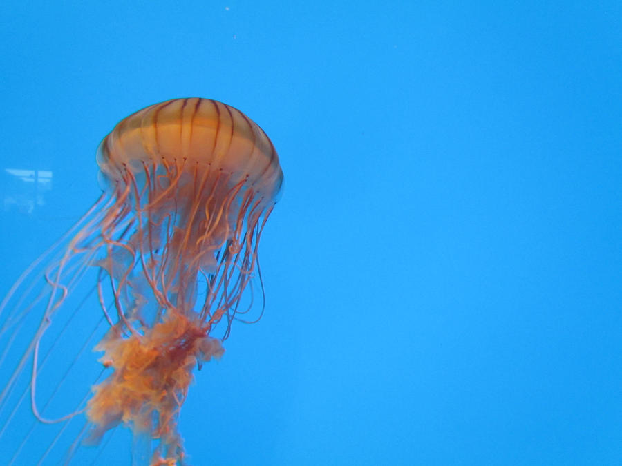 Jellyfish by maraaax3