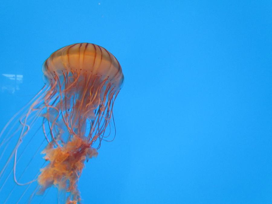 Jellyfish by maraaax3