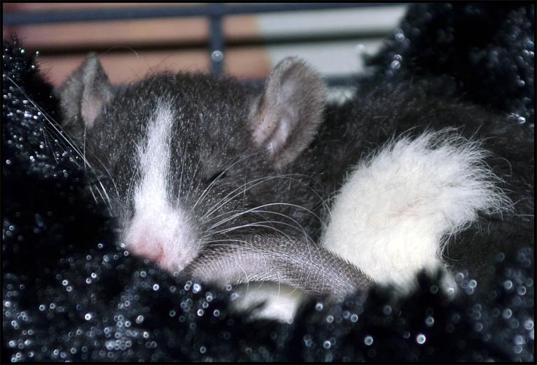 Baby Rex Rat by bapity88