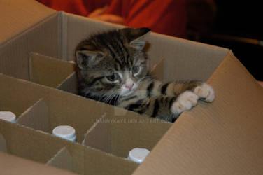 Ninja in a wine box