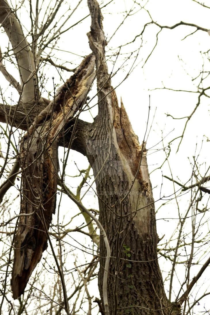 Tree by dannykaye