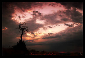 Sunrise over the dead tree by witam